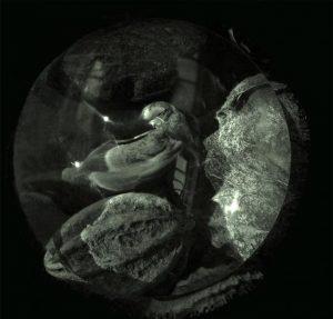 louise_manifold-08