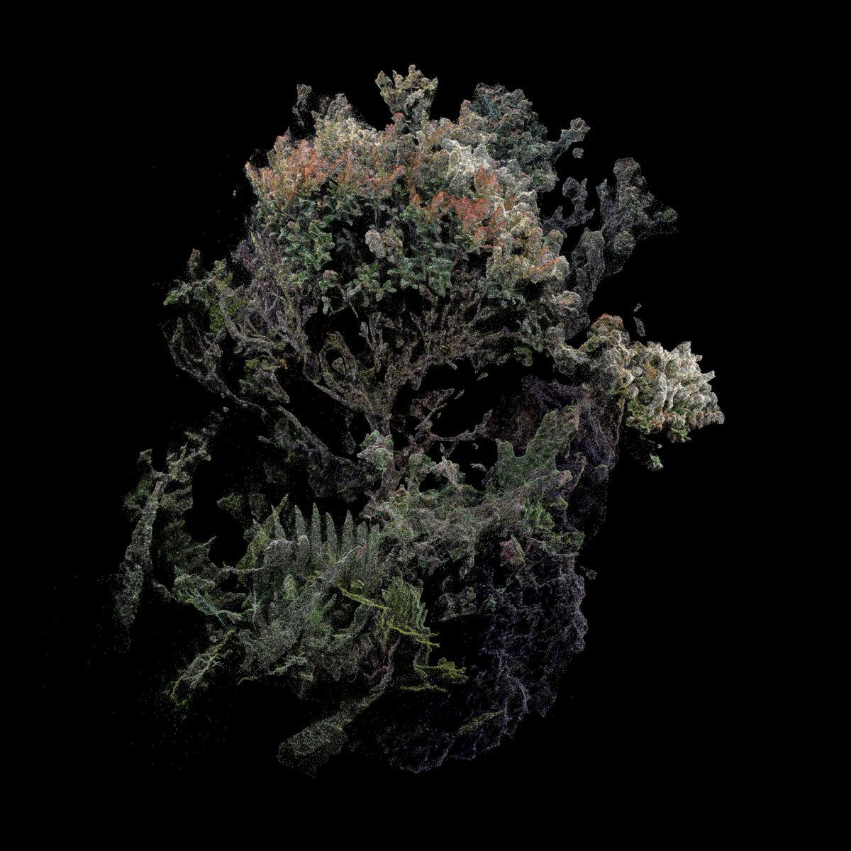 Arbusto (1)